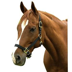 Intrepid International Nylon Horse Halter, Large, Black