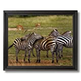 African Zebra Herd Wildlife Home Decor Wall Picture Black Framed Art Print