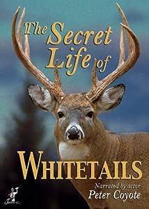 Secret Life of Whitetails