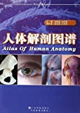 img - for Atlas of Human Anatomy(Chinese Edition) book / textbook / text book