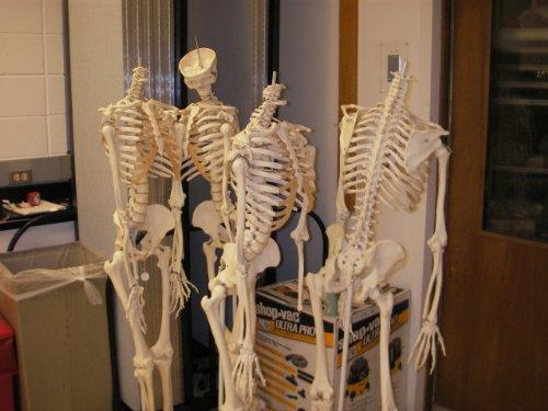 First Year Anatomy Lab