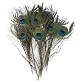 Pack of 30pc Natural Peacock Feathers 10-12''
