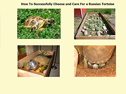 How To Successfully Choose and Care for a Russian Tortoise