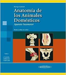 Anatomia de los animales domesticos / Anatomy of Domestic Animals