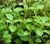 Amazon.co.jpUSDA オーガニック スウィートマジョラム 非遺伝子組み換え種子