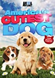 America's Cutest Dog [Import]