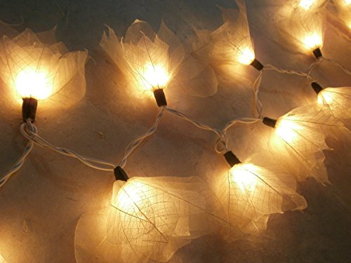 Copter Shop 2 Sets of 20 Natural Cream Flowers Handmade From Para Leaf - Lighting String Lights Set Lamp Decoration Patio Home Living Room Yard Garden Indoor and Outdoor for Birthday, Christmas, New Year, Wedding Anniversary, Ceremony, Graduation, Valentine Party (Cherokee Fog Light Switch compare prices)