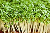 Organic Salad Vegetable - Cress Plain / Common - 1kg Seeds - Bulk Pack