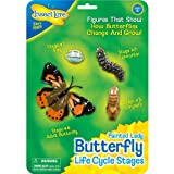Insect Lore Life Cycle Stages Set: Butterfly