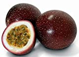 Purple Passion Fruit Seeds by National Gardens