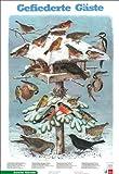 Schreiber Naturtafeln, Gefiederte Gäste