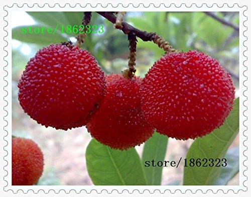 famiglia-bayberry-vendita-semi-hot-corbezzoli-giardino-in-vaso-semi-di-lampone-piantati-alberi-da-fr