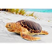 FRP動物オブジェ 産卵場所を探すアカウミガメ / Loggerhead Turtle