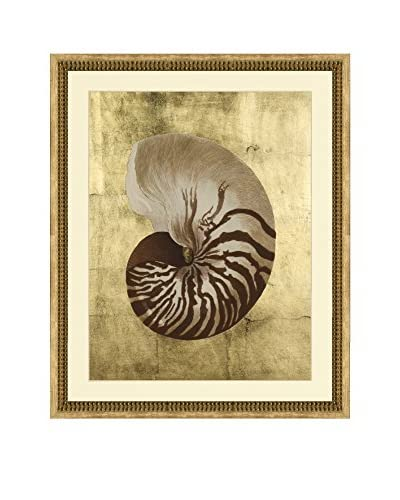 Art Source Sepia Shell with Real Gold Leaf Background II, Multi, 30 x 24