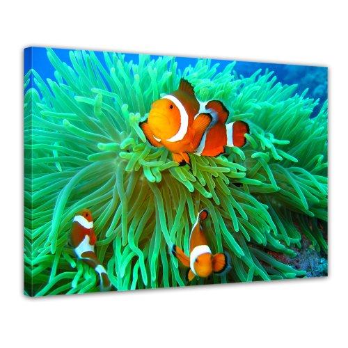 Bilderdepot24 Leinwandbild Nemo found - 70x50 cm 1 teilig - fertig gerahmt, direkt vom Hersteller