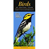 Birds of Central Texas: A Guide to Common & Notable Species (Quick Reference Guides)