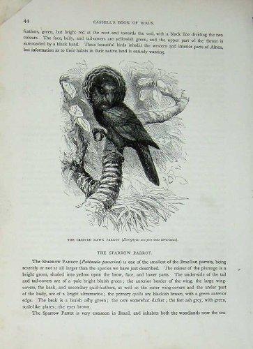 Pappagallo Crestato Coronatus del Falco degli Uccelli C1870 di Cassell