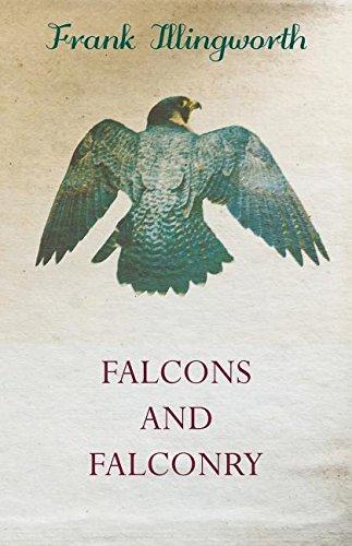 Falcons and Falconry