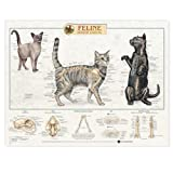 Feline Skeletal System Anatomical Chart (1587793946) by Anatomical Chart Company