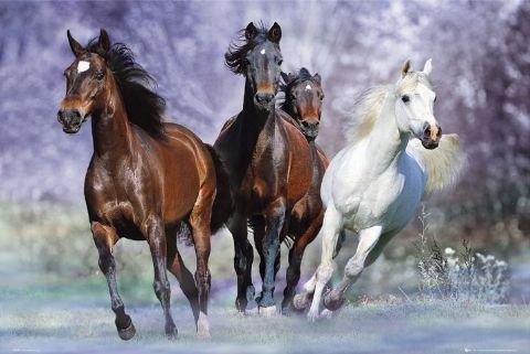 フォト『Langrish(馬の疾走)』ポスター