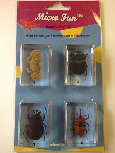Insect Bug Blocks (4 Bug Blocks) - 1