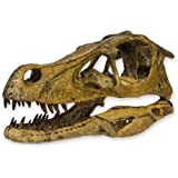 Velociraptor Skull (Teaching Quality Recreation)