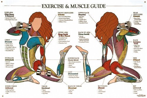 Buy Exercise & Muscle Guide Chart (Female) (Anatomical Chart Company ...
