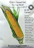 corn gardening