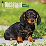 Dachshund Puppies 2016 Square 12x12 W...
