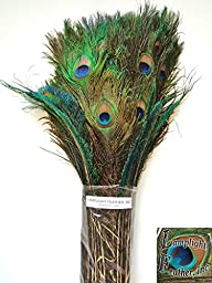 Peacock Eyed Feather Decorator Mix, long - per 100