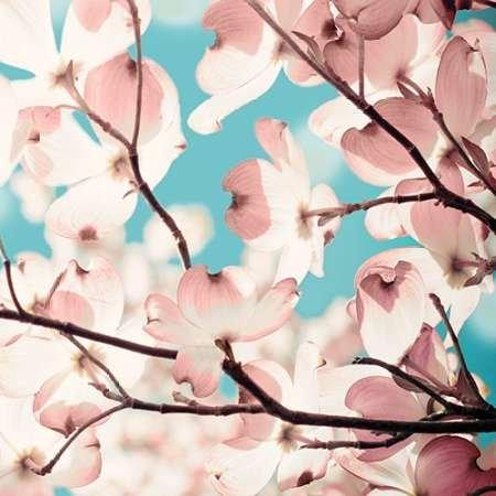 adorn-ii-par-joy-olivia-imprime-beaux-arts-sur-toile-petit-55-x-55-cms