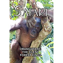Safari Orangutans: The Silent Forest Kings