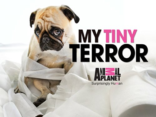 My Tiny Terror Season 1