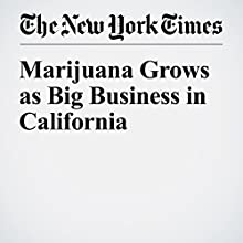 Marijuana Grows as Big Business in California Other by Ian Lovett Narrated by Kristi Burns