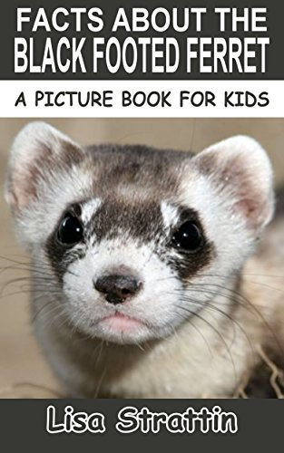 Facts About The Black Footed Ferret (A Picture Book For Kids 28)