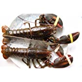 高級特大活オマールエビ(ロブスター)(500g~550g)2尾[カナダ産]★お歳暮!活きているオマール海老ですから、刺し身や寿司で美味しいです!焼く、蒸す、茹でるの簡単料理が美味しいです!