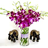 Fresh Cut Purple Dendrobium Orchids with Vase ~ Just Orchids