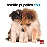 Shetland Sheepdog Puppies 2012 Mini 7X7 Wall Calendar