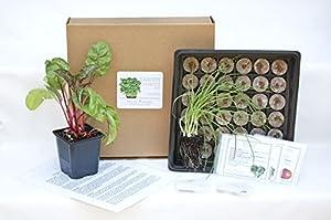 Organic Garden Kit - Start Your Garden Now