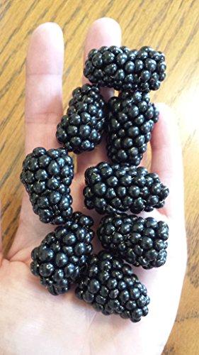 *NEW*WORLDS LARGEST BLACKBERRY*25 seeds*RARE** #1015