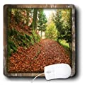 3dRose LLC 8 x 8 x 0.25 Inches Mouse Pad, Painted Autumn Forest (mp_34097_1)