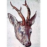 Art Panel - Head Of A Deer By Durer