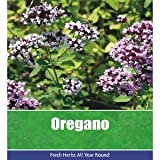 De Ree Oregano Oreganum Vulgare Herbs Herb Vegetable Plant 400 Seeds