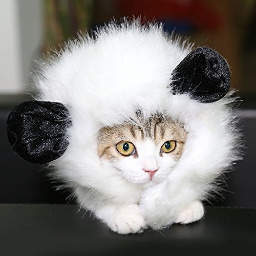 Doglemi Cat Lion Panda Mickey Mane Wig Cat Costume Hat Hair Cat Pet Puppy Cosplay Wig (White, M)