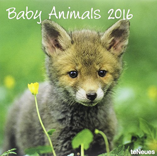 Baby Animals 2016 Calendar