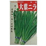 在来固定種 伝統野菜の種「大葉にら」5ml約550粒 畑懐〔はふう〕