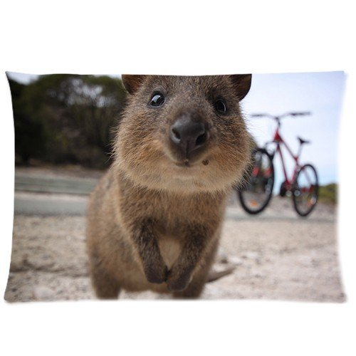 Futefew Soft Pillow Case Cover Decorative Sofa Throw Pillow 20*30 Inch (Twin Sides) Zippered Pillowcase Cute Rottnest Island Quokka Pattern Popular Design Gift for Fans Easter Thanksgiving Mother's Day