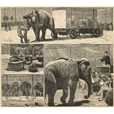 Myers' American Circus Auctioned (Print On Demand)