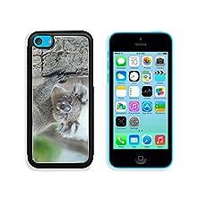 buy Msd Apple Iphone 5C Aluminum Plate Bumper Snap Case Australian Koala Sit On Tree Sydney Nsw Australia Exotic Iconic Aussie Mammal Animal With Infant In Lush Jungle Rainforest 35303003