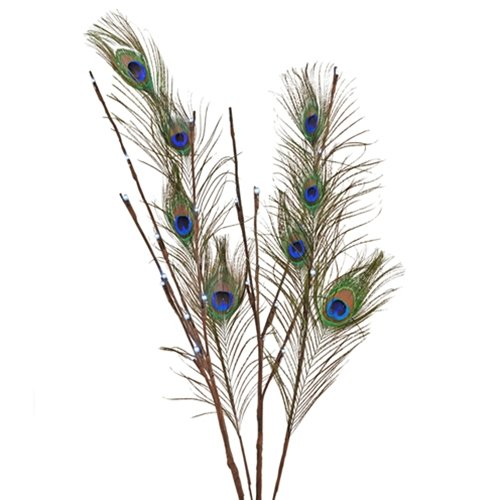 Lighted Branches, 27 inch, Peacock Feathers, 24 LEDs, Battery, Timer